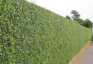 hedge-cutting-maintenance-tottenham