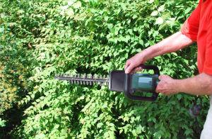hedge-trimming-tottenham